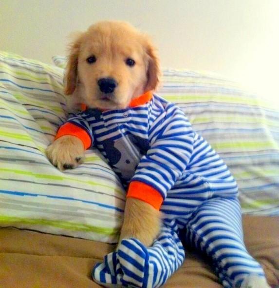 filhotes-cachorros-pijamas (1)