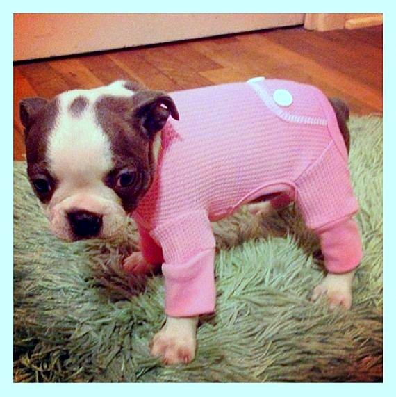 filhotes-cachorros-pijamas (11)