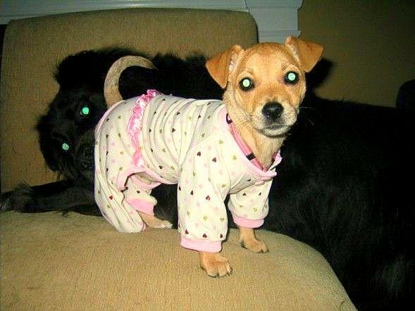filhotes-cachorros-pijamas (15)