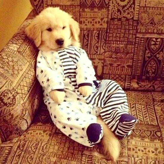 filhotes-cachorros-pijamas (17)