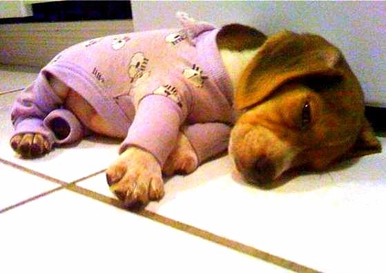 filhotes-cachorros-pijamas (19)