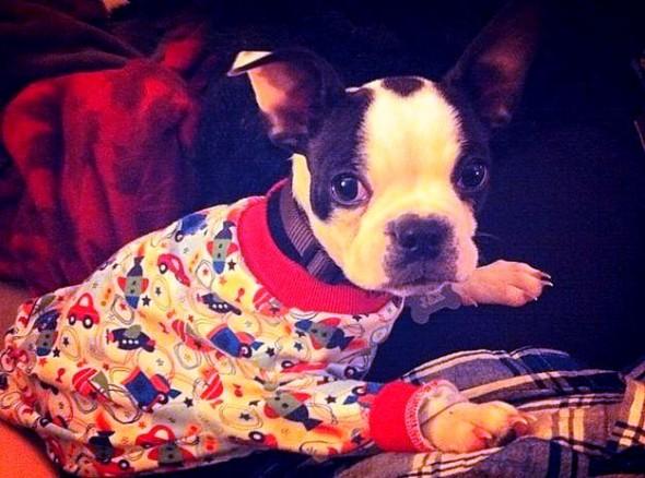 filhotes-cachorros-pijamas (24)