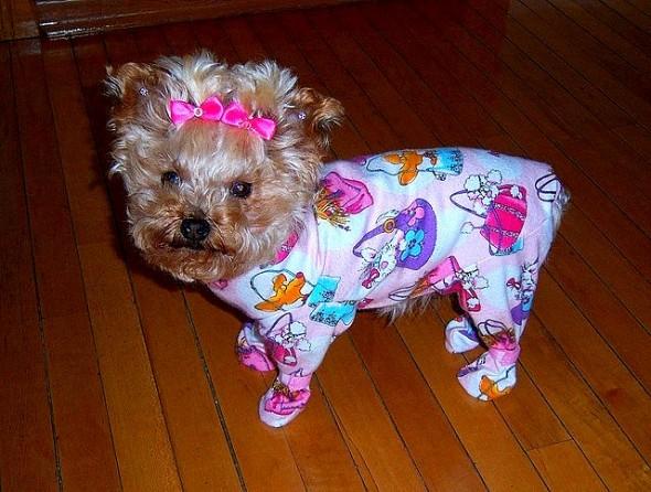 filhotes-cachorros-pijamas (26)