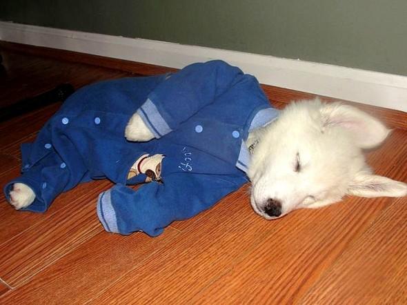 filhotes-cachorros-pijamas (28)