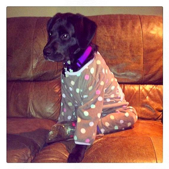 filhotes-cachorros-pijamas (3)