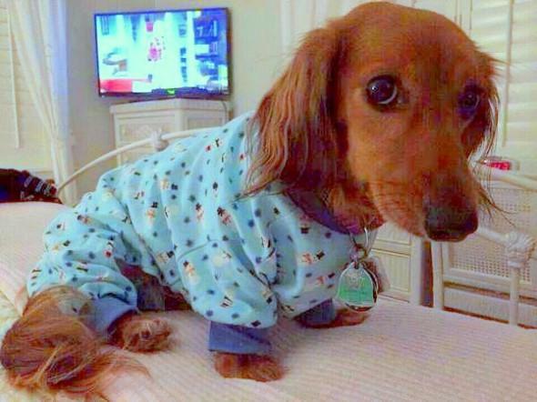 filhotes-cachorros-pijamas (4)