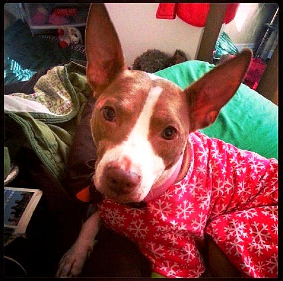filhotes-cachorros-pijamas (6)