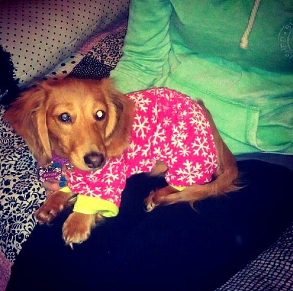 filhotes-cachorros-pijamas (7)