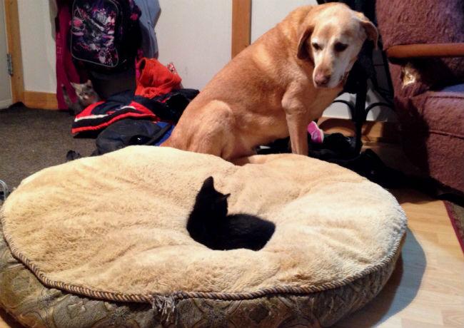 gato-na-cama-de-cachorro-09
