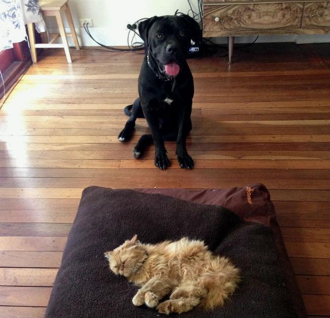 gato-na-cama-de-cachorro-11
