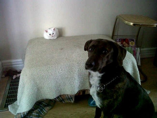 gato-na-cama-de-cachorro-14