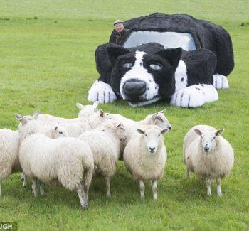 O carro se mostrou um ótimo cão de pastoreio. (Foto: Reprodução / Daily Mail UK)