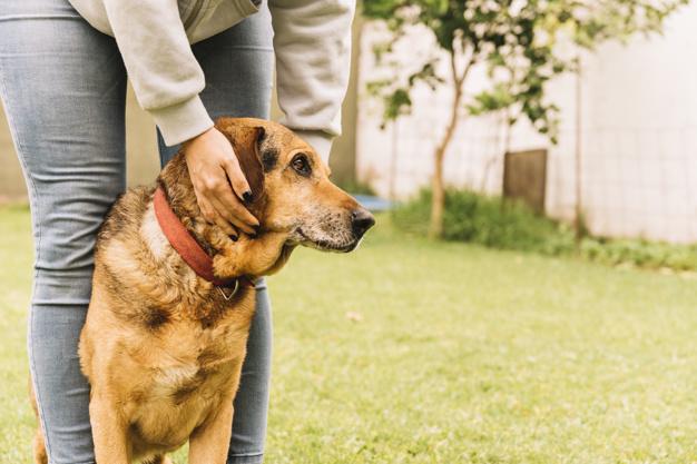 perda auditiva em cães