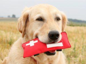 Primeiro-socorros em cães. Foto: Reprodução