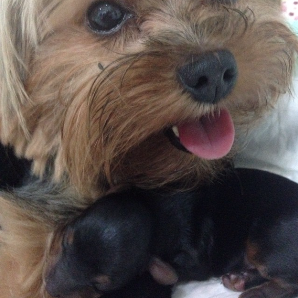 A cachorra Nina com Zequinha e Chiquinho. (Foto: Reprodução / Instagram)