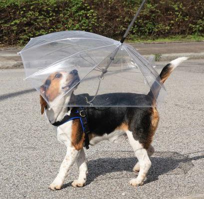 Guia guarda-chuva. (Foto: Divulgação)
