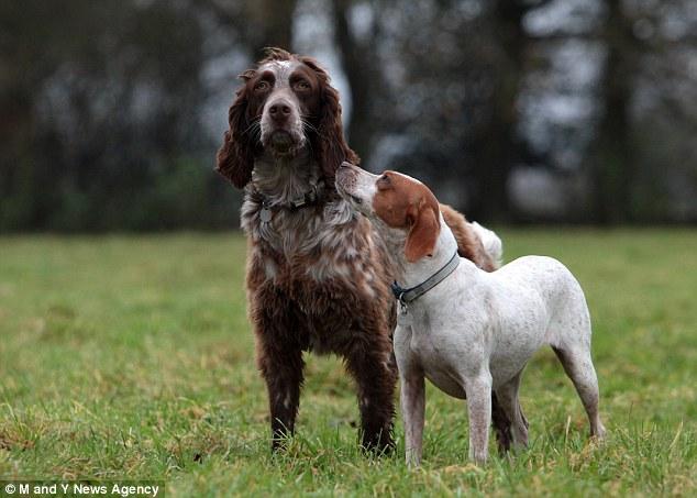 Romeu e Julieta continuam juntos. (Foto: Reprodução / Daily Mail UK)