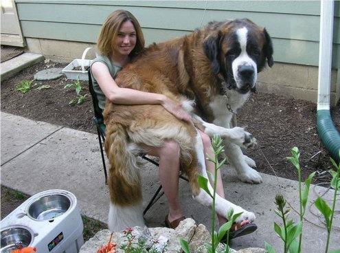 Qualquer cachorro pode ficar no seu colo! (Foto: Reprodução / Google)