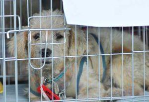 Cachorros são considerados impuros no Islamismo. (Foto: Reprodução / Pet MD)