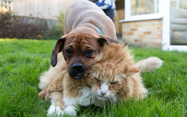 O filhote Dennis é o personal trainer do gato Ulric. (Foto: Reprodução / Bark Post)