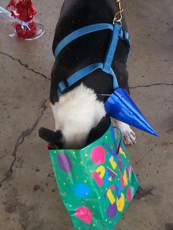 Butch abrindo seu presente. (Foto: Reprodução / AL.com)