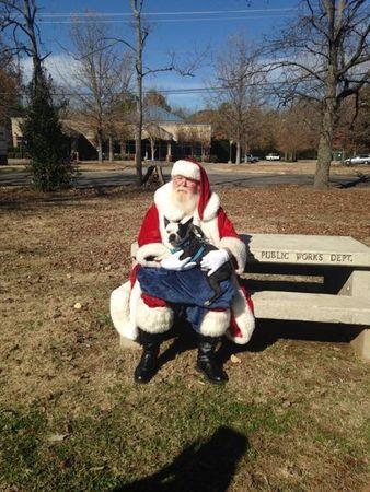 O cão tirou foto com o Papai Noel. (Foto: Reprodução / AL.com)