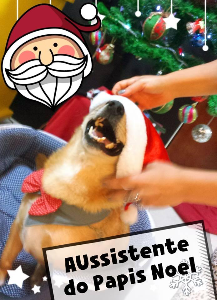 O cão já ficou famoso. (Foto: Reprodução / Facebook / Mariana Siebert)