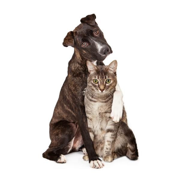 Gatos também são fotografados por Susan  Schmitz. (Foto: Reprodução / Susan Schmitz / A Dog's Life Photography / Dogster)
