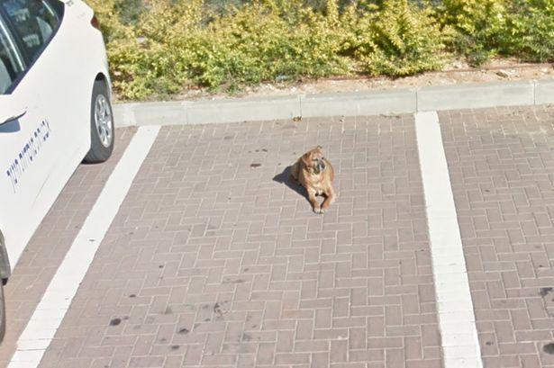 Homem encontrou uma foto de seu cachorro que faleceu alguns anos atrás. (Foto: Reprodução / Mirror)