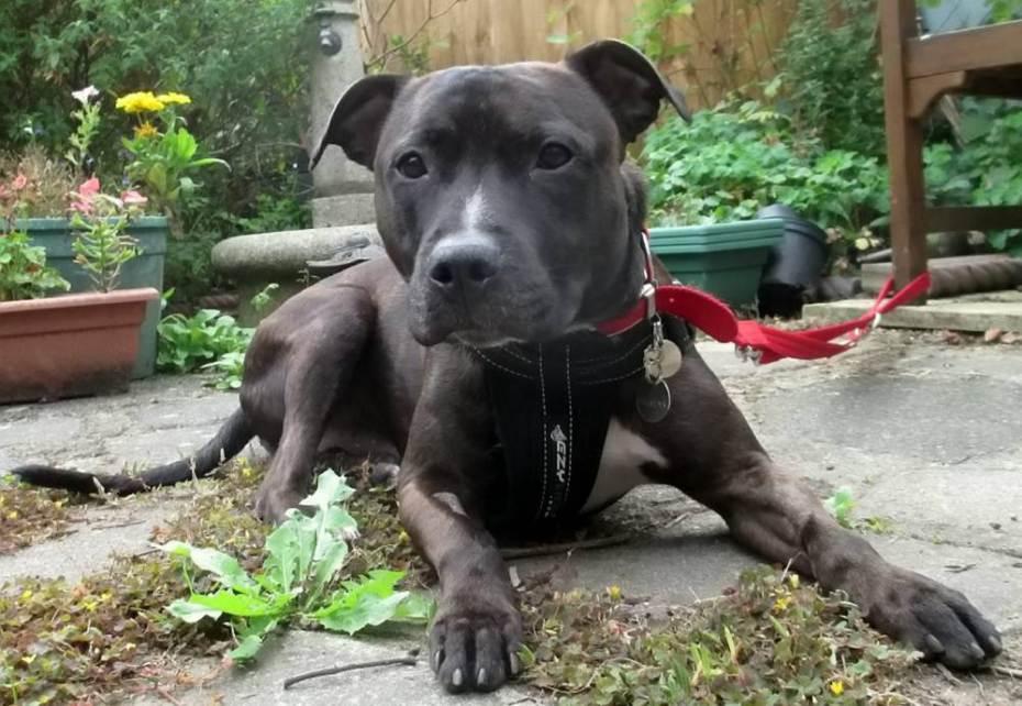 O cão Gizmo não abana o rabo para os visitantes porque é muito tímido. (Foto: Reprodução /  Metro UK
