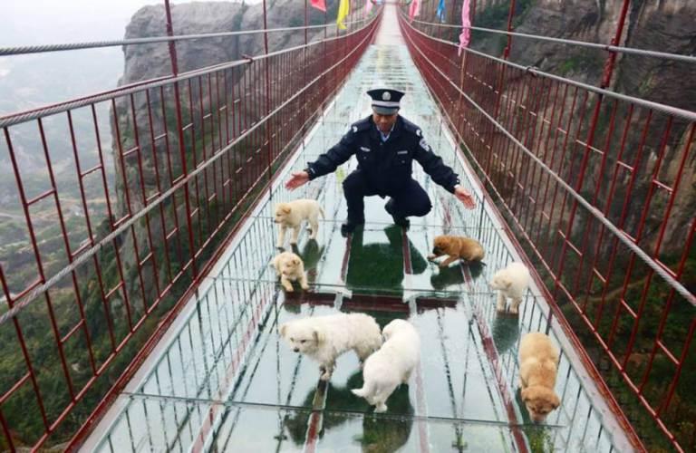 O guarda incentivando os cachorros a saírem da ponte. (Foto: Reprodução / Metro UK)