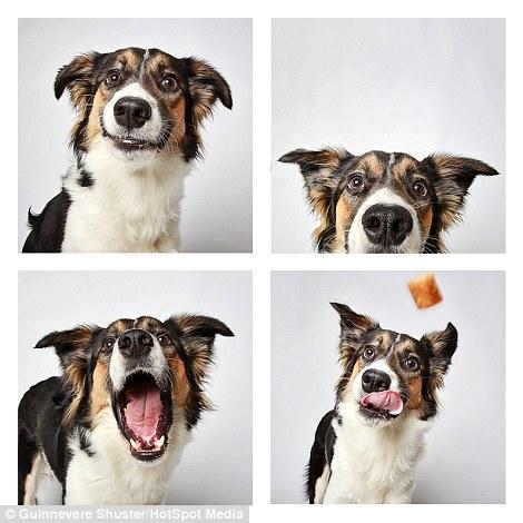 cachorros-abrigo-12