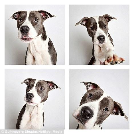 cachorros-abrigo-15