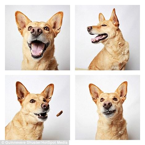 cachorros-abrigo-16