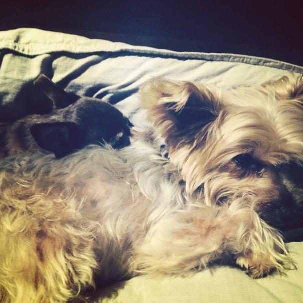 Os cachorros Coco e Jak. (Foto: Reprodução / Instagram)