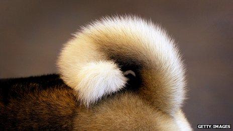 close-up-cachorros-fotos (1)