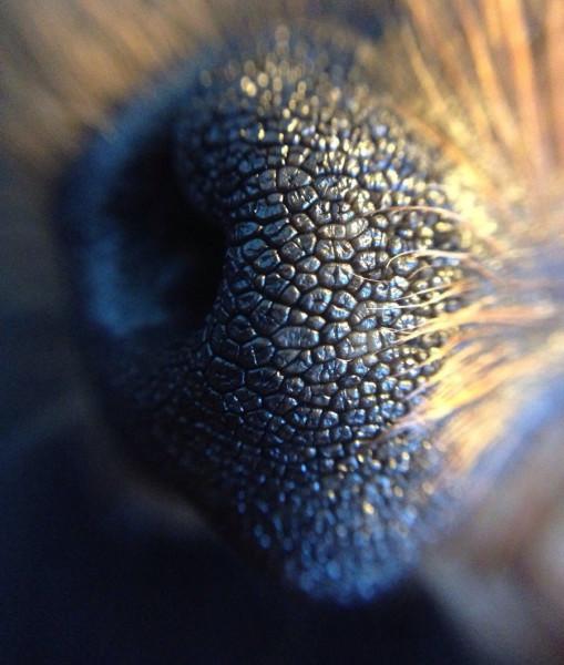 close-up-cachorros-fotos (12)