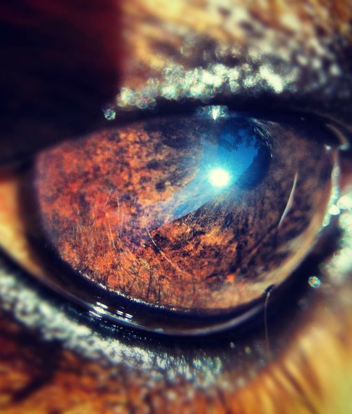 close-up-cachorros-fotos (13)