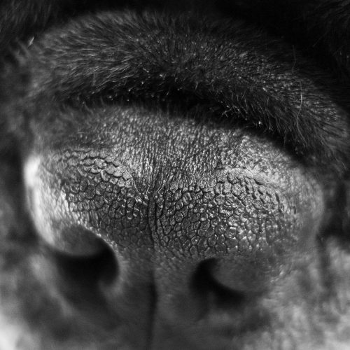 close-up-cachorros-fotos (15)
