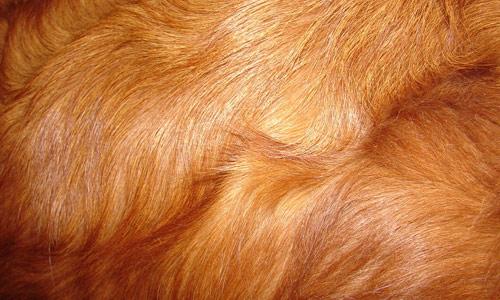 close-up-cachorros-fotos (18)