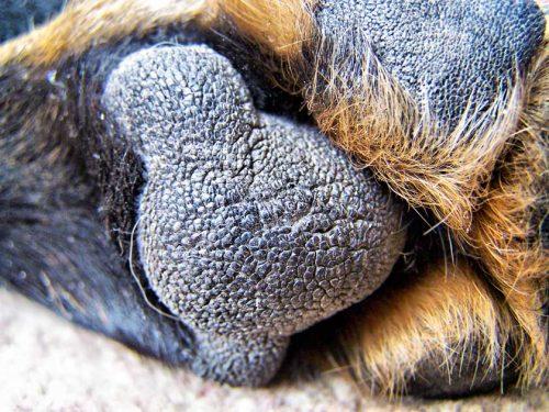close up de cachorros portal do dog. Black Bedroom Furniture Sets. Home Design Ideas