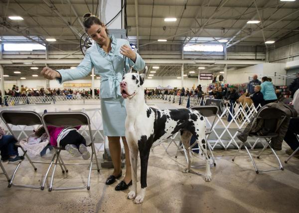 Um Dog Alemão. (Foto: Reprodução / NBC Sports)