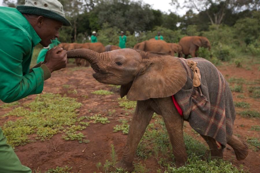 Elefantes protegidos. (Foto: Reprodução / Bark Post)