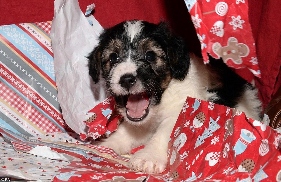 A ONG quer incentivar a adoção de cães abandonados. (Foto: Reprodução / Daily Mail UK)