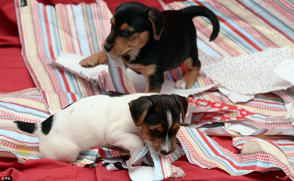 A brincadeira dos cães rendeu belas fotos. (Foto: Reprodução / Daily Mail UK)