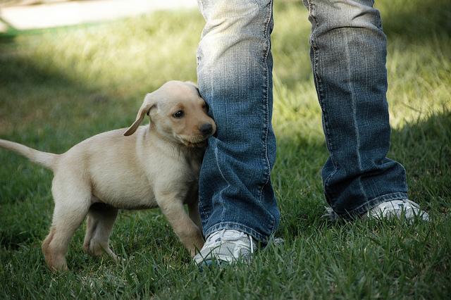 Mudar algumas atitudes pode ajudar a acabar com esse hábito dos filhotes. (Foto: Reprodução / the I Love Dogs Site)