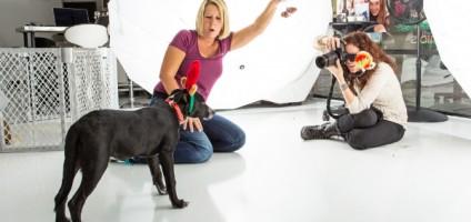 Por uma boa causa. (Foto: Reprodução / Susan Schmitz / A Dog's Life Photography / Dogster)