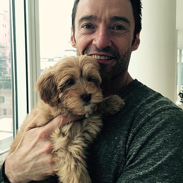 Hugh Jackman com sua nova cachorra. (Foto: Reprodução / Instagram)