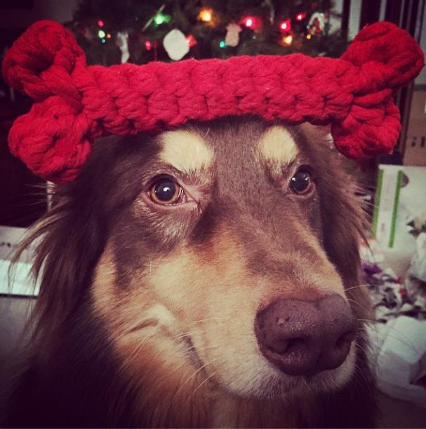 Cachorro Finn de Amanda Seyfried. (Foto: Reprodução / Instagram)