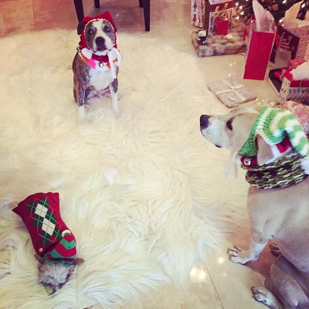 Os cachorros de Kaley Cuoco: Norman, Shirley e Rubi (a menor).  (Foto: Reprodução / Instagram)